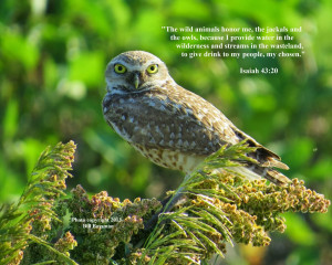 Ask the Birds and They Will Tell You: Bird Photos With Bible Verse 2