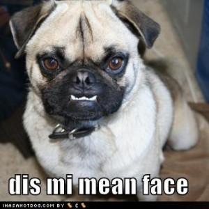 funny-dog-pictures-dog-shows-you-his-mean-face.jpg