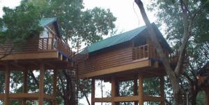 Park Night Trail Tree House