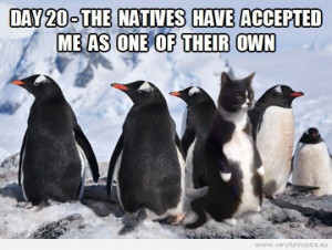 Funny Picture - A cat amongst penguins - Day 20 - The natives hav ...