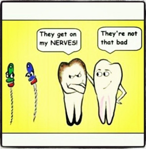 root nerveDental Humor, Dental Hygiene, Roots Nerves, Dentistry Funny ...