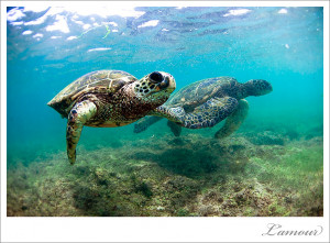 Underwater photos – L'Amour's Daily Shot of Love – Turtle Love