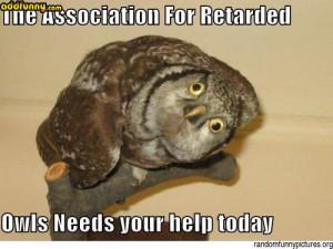Funny Captions The Association For Retarded Owls random