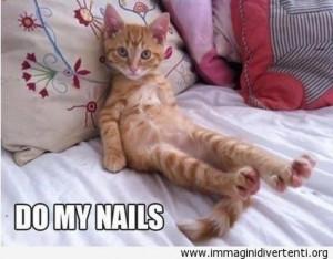 Tag: Gatto , Simpatico