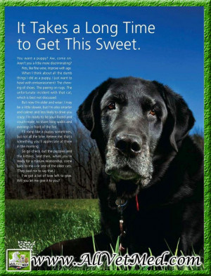 Senior Dogs Quotes #old #dogs #quotes #poem #