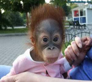 Funny Monkey Pictures, Baby Funny Monkey Images