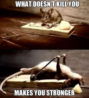 69 25 Funny Animal Memes To Make You Laugh Till You Drop