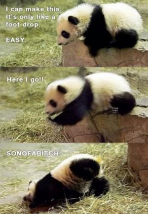 Cute Panda Baby Making a Jump