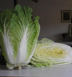 CHINESE CABBAGE Rubicon F1
