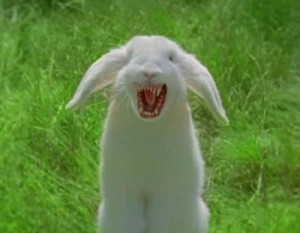 angry bunny bunny angry tweets 18 following 6 followers 5 favorites 3 ...