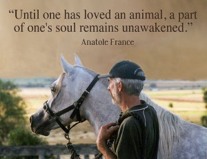 The Animals in our lives-Sunday Quote of the Week