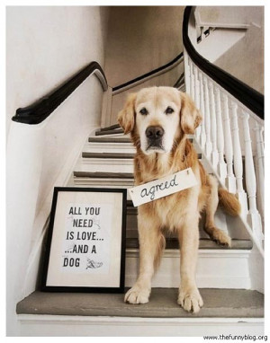 funny-animals-with-sayings-all-you-need-is-love-and-a-dog-agreed-funny ...