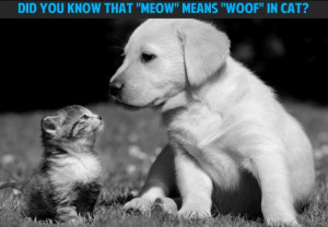 Cute #puppy #kitten #dogs #cats #quote