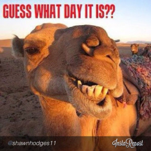 Hump Day! #Wednesday #HumpDay #Camel #funny #humor