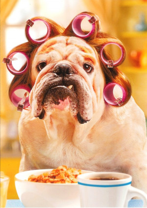 Funny Good Morning Dog Curlers Cereal Coffee Picture