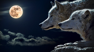 Wolves and Full Moon Wallpaper - Public Domain