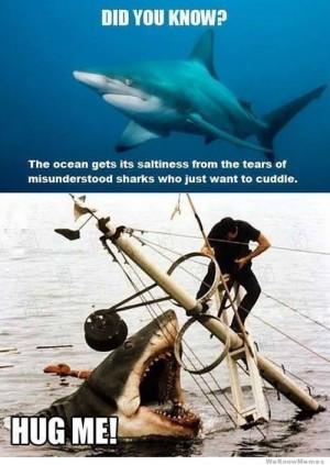 20 Funniest Shark (Week) Memes Gifs And Comics