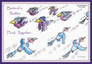 Birds of a feather, flock together, quote on fun colourful bird ...