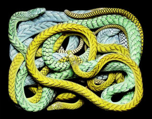 image-serpent