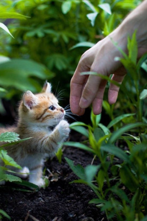 ... cat.com/2013/07/adorable-cute-and-sweet-little-kitty-try-to-hand-shake