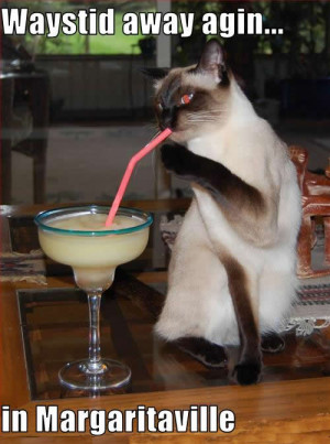 Funny cat picture; hilarious photo a Siamese Cat drinking a margarita ...