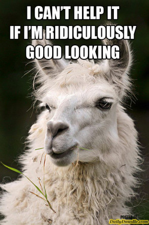 ... llama, cute, awesome, 10 Examples Why Llamas are the Coolest Animals