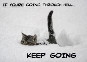Cute Kitten Quotes   cute kitten walks through deep snow in this ...
