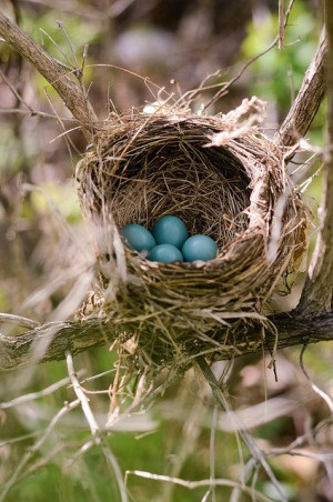 ... Birds Nests, Little Birds, New Life, Robin Nests, Pretty Birds, Mother