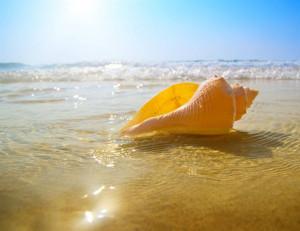 Sunny Beach Vacation Rentals & Sales Inc