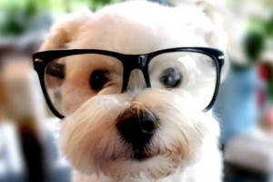 Funny Cute Puppy With Glasses Best Photographs 2013