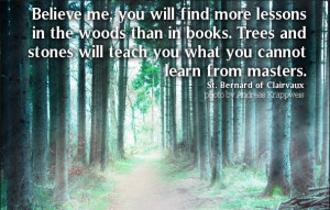 Believe me, you will find more lessons in the woods than in books ...