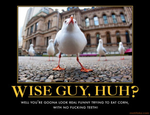 wise guy huh seagulls blues brothers quote