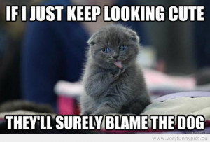 Funny Picture - If i just keep looking cute theyll surely blame the ...