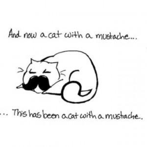 cat #funny #mustache