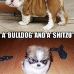 Boxer Dogs Funny Quotes