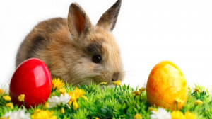 Easter Bunny 2013 Background HD Wallpaper Easter Bunny 2013