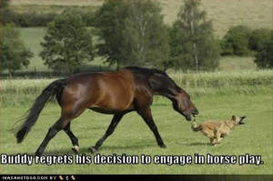 funny horse and dog