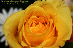 Yellow rose quote