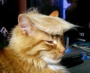 Donald Trump kitty