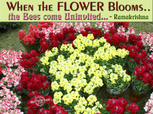 When the flower blooms, the bees come uninvited
