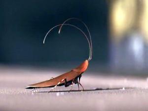 wall e cockroach
