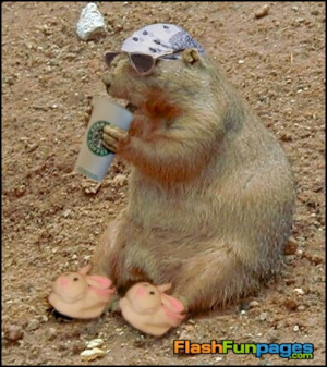 Tags: funny animals , funny groundhogs , Groundhog Day