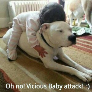 Pit Bull Lovers Sayings | Funny Pit Bull Love Pibble - funnypit funny ...
