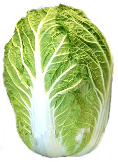 Chinese Cabbage Wong Bok F1