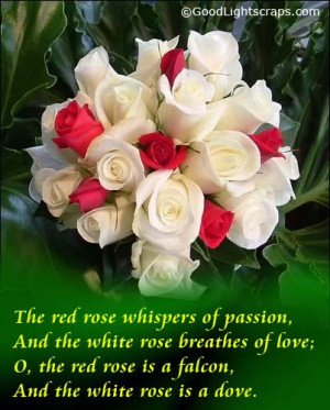 ... white-rose-breathes-of-love-the-red-rose-is-a-falcon-and-the-white