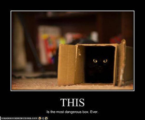 Black Cats that are NOT ME!! I swear!!