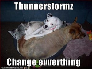 funny animals during a thunderstorm