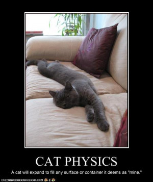 """... surface or container it deems as """"mine"""". Cat physics explained"""
