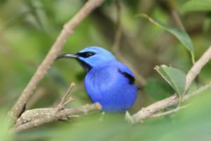 Photo Courtesy of Judy Smith of Bird Essentials