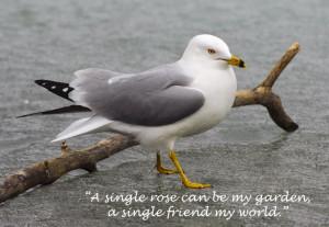 Friends Love Quotes Garden